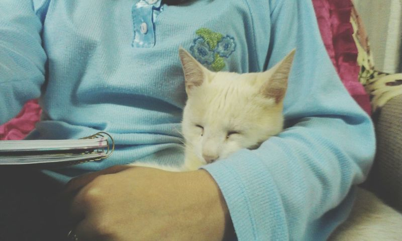 Good Night. Cat Love Goodnight Paraná