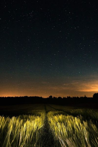 Field Scenics Beauty In Nature Tranquility Tranquil Scene Nature Landscape Night Agriculture Sky Growth Outdoors Rural Scene Star - Space No People Astronomy Space Galaxy Stars At Night Hobby