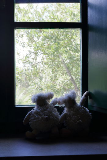 Eye4photography  Indoors  No People Snoopy Stuffed Toy Teddy Bear Toy Window