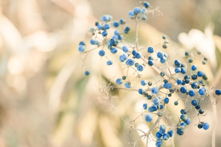 Selective Focus Close-up Plant Blue Pattern Focus On Foreground Nature Day Midsection No People Floral Pattern Flower Design Flowering Plant Outdoors Springtime White Color Standing