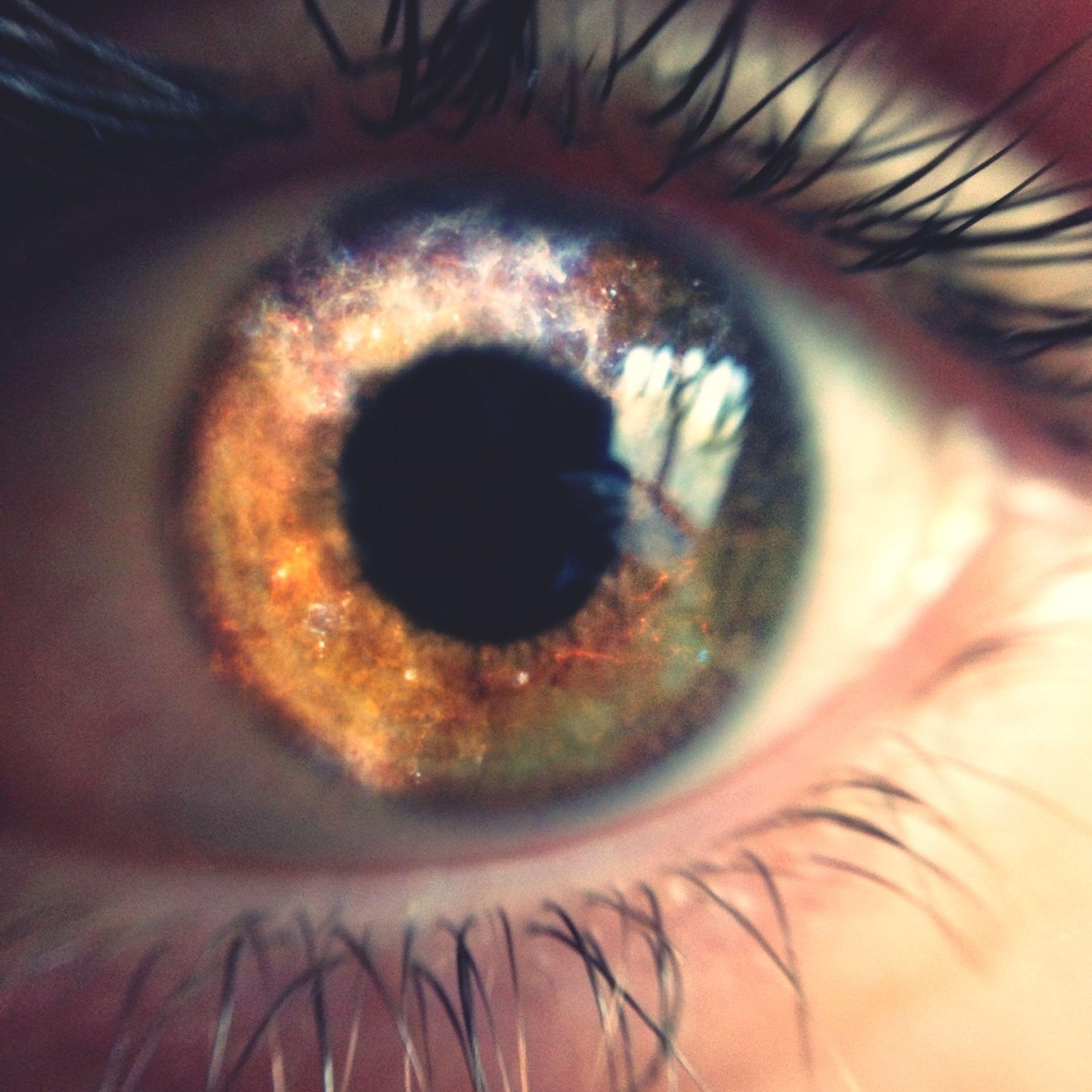 human eye, eyelash, eyesight, close-up, extreme close-up, sensory perception, eyeball, iris - eye, part of, indoors, extreme close up, full frame, human skin, person, unrecognizable person, backgrounds, eyebrow