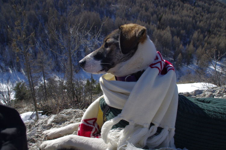 Animal Themes Cozy Cute Day Daydreaming Dog Dog With Scarf Domestic Animals Funny Dog Lost In Thought... Mammal Mounatins Nature No People Observing Nature One Animal Outdoors Pet Clothing Pets Snow Sunshine Travel Companion Warm Clothing Pet Portraits