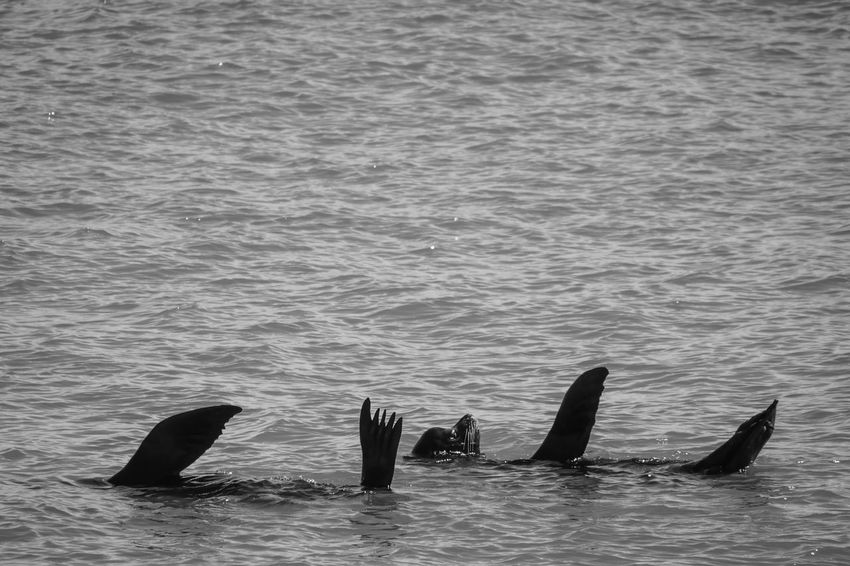 EyeEm Ready   Be. Ready. Couple Dancing Friends Sea Lion Animal Marine Life Nature Outdoors Sea Sunbathing Wildlife Black And White Friday