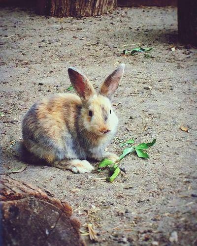 Walking Around Pets Animals Rabbit Cutness Sweet Little Babyanimal Varna Bulgaria Seagarden