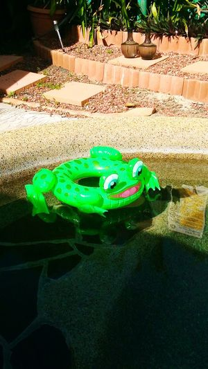 Green Color Animal Themes Water Outdoors Multi Coloured No People Play With Light And Shadow Pool Toy waiting for summer