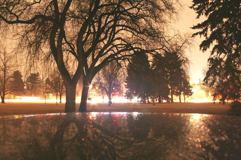 One of the first pictures I took in my Photography101 class. Back in 2014 when I was just a Newbie ✌ and learning the basics of a DSLR Dslrphotography ! My first HDRphoto Rainynights Denver,CO Citypark TreePorn Slowshutter Canonrebelxti Raindrops Photographyislife Mypassion Denver Colorado Colorfulcolorado Citystreets Citylights Natureinthecity Firstpostoneyeem First Eyeem Photo