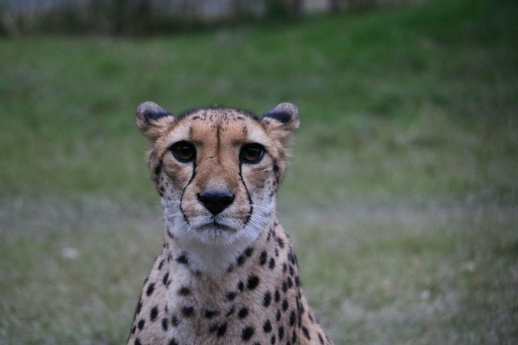 EyeEm Selects Animal Wildlife Animals In The Wild Animal One Animal Looking At Camera Mammal