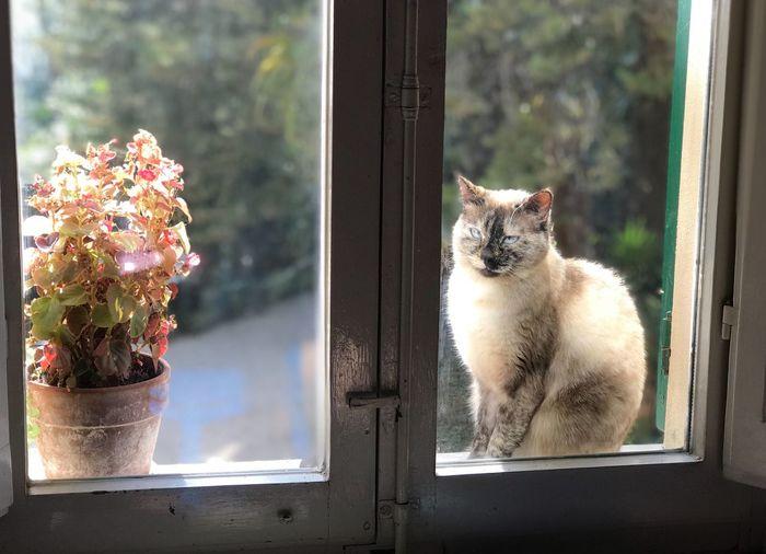 Mammal Animal Window Animal Themes Domestic Animals Feline Cat Pets Domestic Glass - Material Plant Domestic Cat Flowering Plant Window Sill