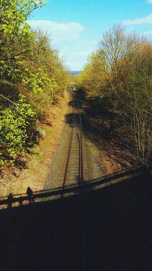 Track Tree Nature Bridge