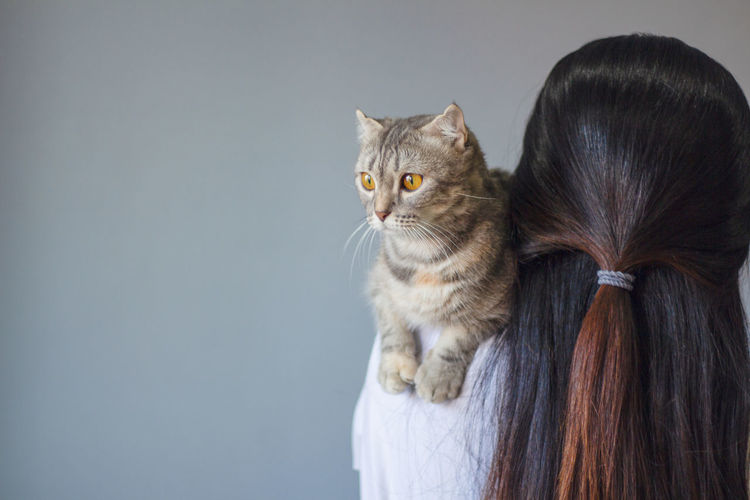 Rear view of cat against white background