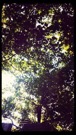 Nature Harmony Trees LeavesGreece Summer Kastoria