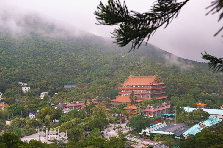 Hong Kong Po Lin Monastery Lantau Island Tree Plant Building Exterior Architecture Built Structure Building Mountain Nature No People Growth City Day High Angle View Residential District Sky Outdoors Roof House Fog TOWNSCAPE