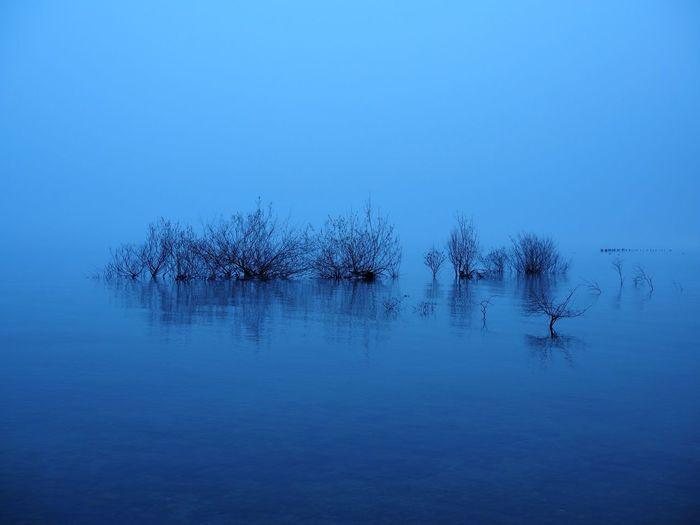 The vanishing horizon Beauty In Nature Blue Day Lake Nature No People Outdoors Reflection Scenics Sky Tranquil Scene Tranquility Tree Water