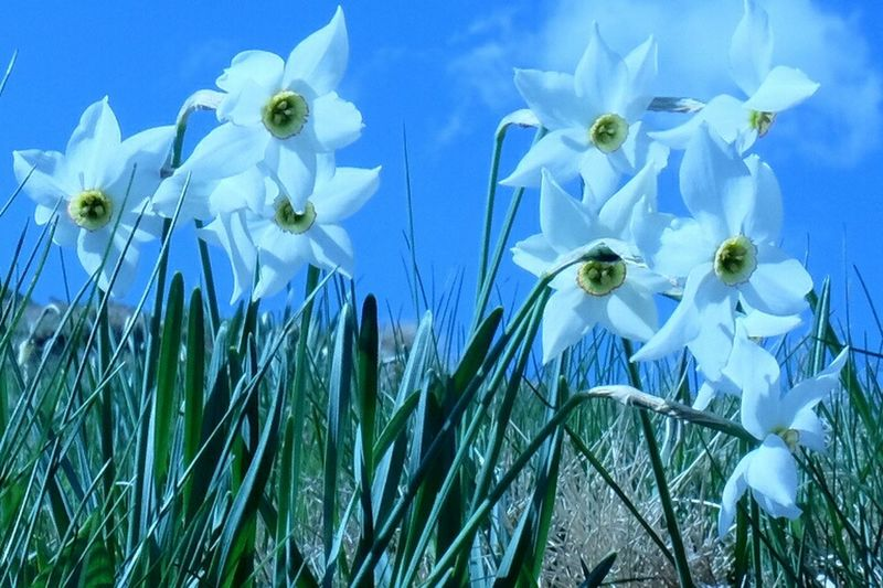 Flower Growth Plant White Color Nature Fragility Flower Head Freshness Petal Blue Uncultivated Close-up Grass Outdoors Beauty In Nature Day No People Sky Snowdrop Crocus