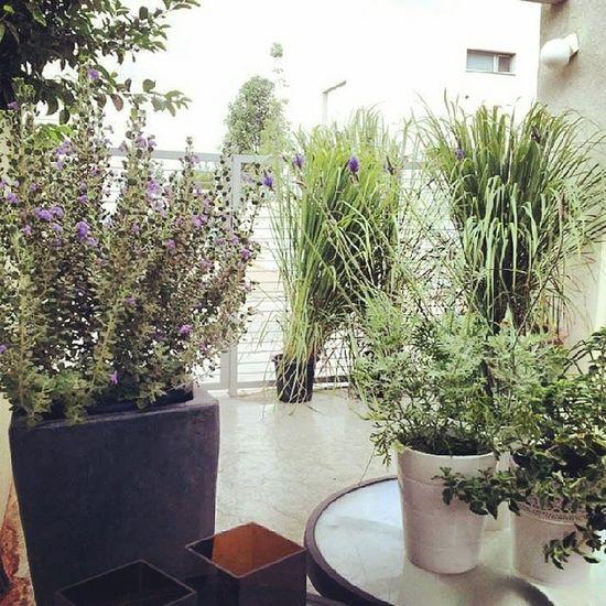 Escape CountryLivinG Decor Exterior Gardening mynewlife picoftheday