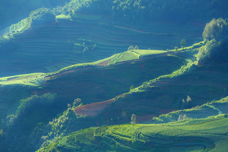 Beautiful landscape of mountain range with beam light in morning at Hongtudi in Dongchuan, Yunnan, Kunming of China Beauty In Nature Scenics - Nature Tranquil Scene Green Color Tranquility Landscape Growth Environment No People Nature Land Plant Non-urban Scene Day Mountain Idyllic Agriculture Tree Outdoors High Angle View China