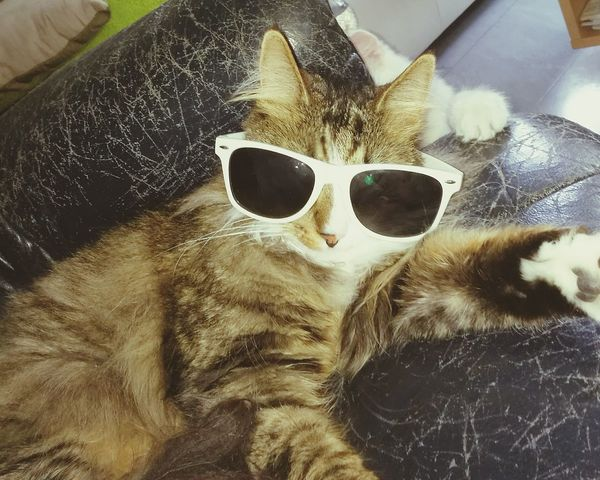 Good old days Sunglasses Close-up No People Selfie ✌ Looking At Camera Cats 🐱 Pet Portraits