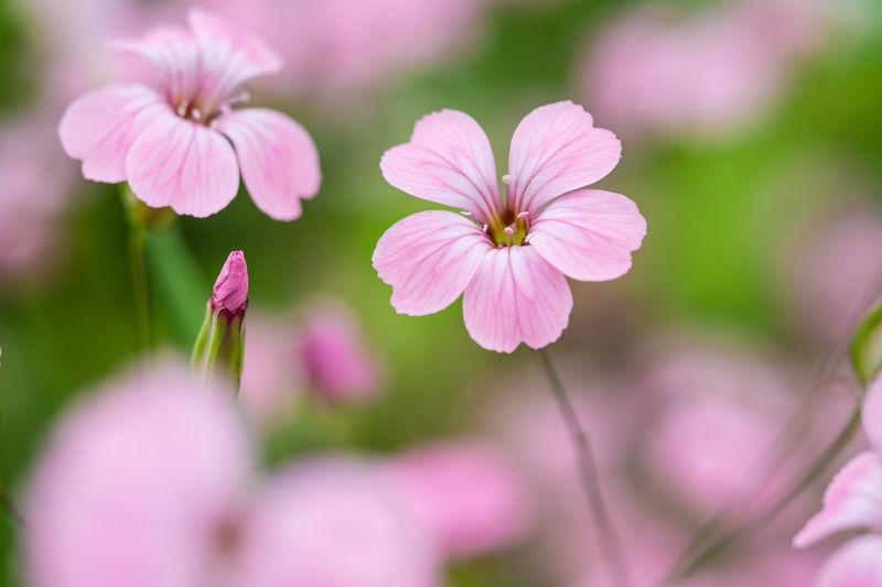 Flora Blumen