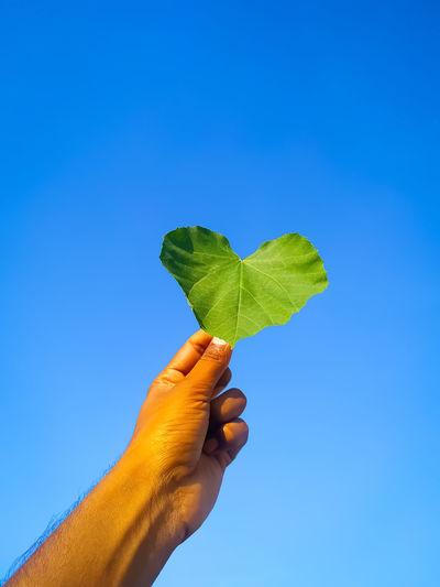 Cropped image of hand holding leaf against blue sky