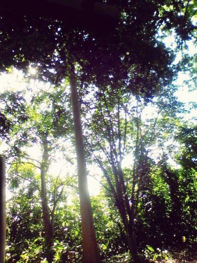 Bosque na Universidade.