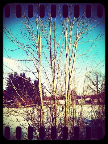 Snow Day #tree #sun #life