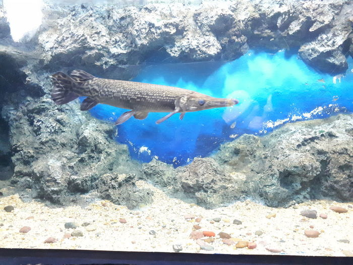 UnderSea Water Sea Life Swimming Underwater Fish Blue Sea Wildlife Carp School Of Fish Streamer National Holiday Pond Reef Soft Coral Lotus Diving Suit Whale Shark Shark Cancun Aquarium Stingray Koi Carp Tropical Fish Scuba Diving Large Group Of Animals Lily Pad Water Lily