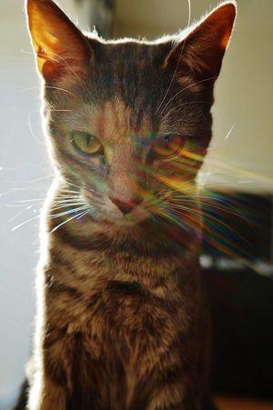 My Best Photo 2014 Animals Cat Cats Rainbow Aura Coloursplash Colours