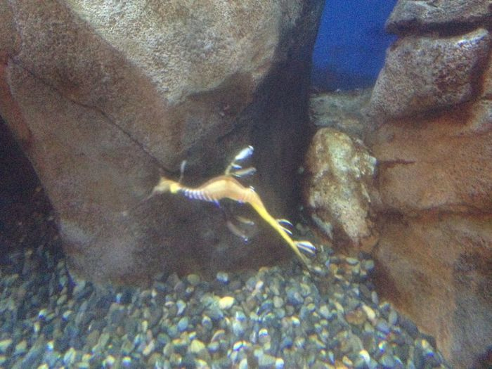 Aquarium Clownfish Fish Medusa Medusangel Nature Ocean Seahorse Water