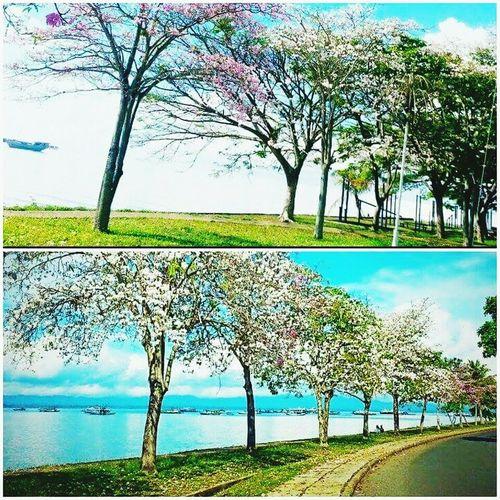 Its so beautiful!!!! Onlyintawau Highwaytawau Bandar Tawau Malaysia Relaxing