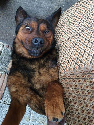 Close-up of dog cuddling