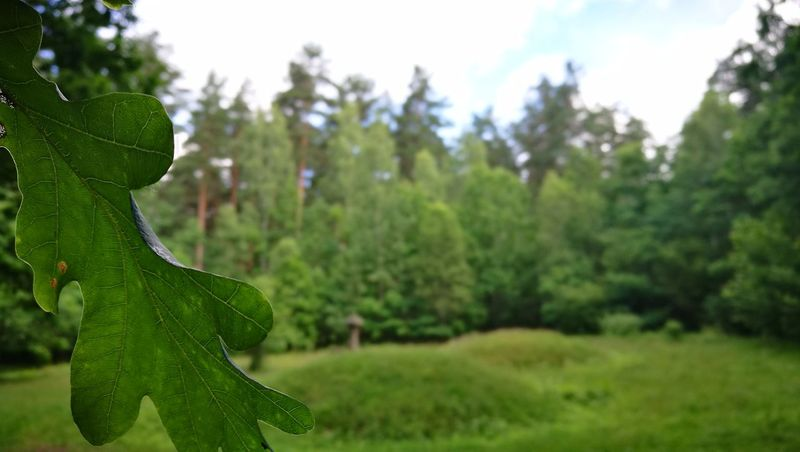 Tree Green Color Nature No People Outdoors Day Focus On Foreground Growth Beauty In Nature Forest Close-up Grass Sky Flora Lithuania Lietuva Litwa Life Przyroda Beauty In Nature Green Color Tree