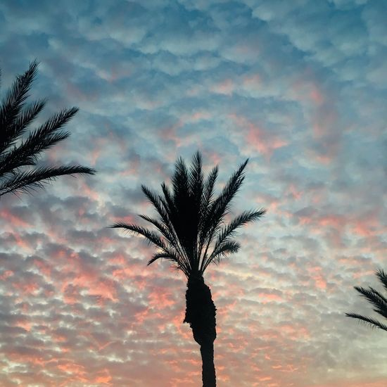 Plant Sky Cloud - Sky Sunset Tree Silhouette Beauty In Nature Nature Growth Low Angle View No People Tranquility Outdoors Scenics - Nature Tranquil Scene Palm Tree Dramatic Sky Dusk Branch Orange Color