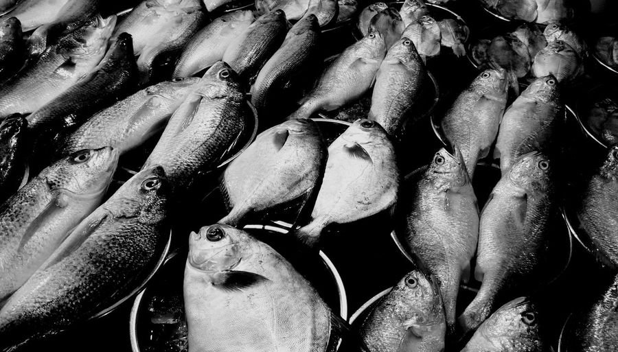 Full Frame Shot Of Fish For Sale At Street Market