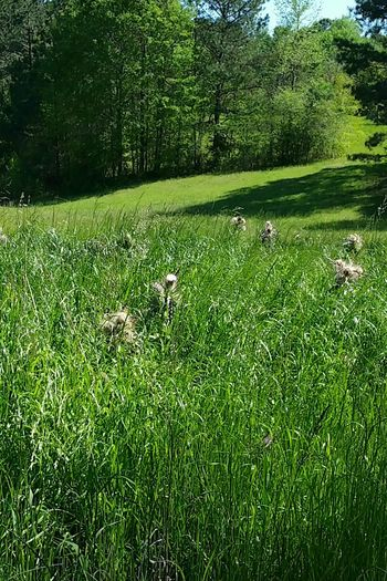 Landscapes Of Eyeem Landscape_photography Landscape Tall Grass Thistle Wildflowers Trees Shades Pasture Land Hills Valley