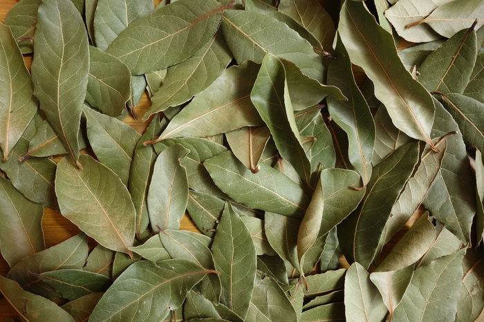 Laurier Aromatic Herb Aromatic Plant Bay Leaves Close-up Dried Plant Food Green Color Herbivorous Laurel Leaves Leaf Leaves Lorbeer Mediterranean Cuisine Spice