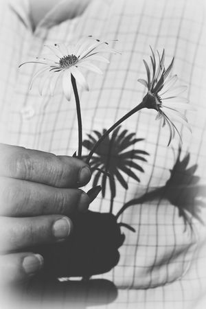Bw Vertical Flower Human Hand One Person Wellcome Spring Margaritas Sombra Blancoynegro Blackandwhite Romantic Regalo Present