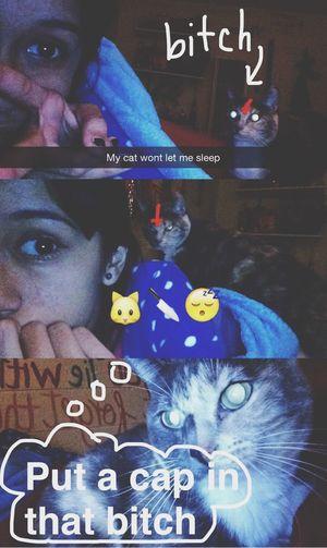 Snapchat Cat Compelling Saga Ayyy