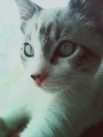 Cat Gohan ♡ Hello World