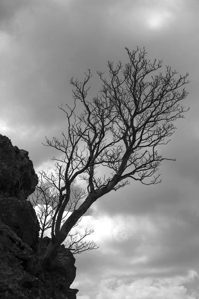 Bare Tree Beauty In Nature Blackandwhite Photography Branch Cloud - Sky Day Isolated Low Angle View monochrome photography Nature No People Non-urban Scene Outdoors Overcast Plant Rock And Tree Scenics - Nature Silhouette Sky Tranquil Scene Tranquility Tree Trunk
