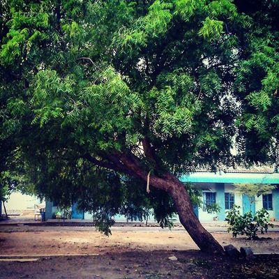This Bent Tree Always Hits My HEAD Iith Nostalgia Instapic