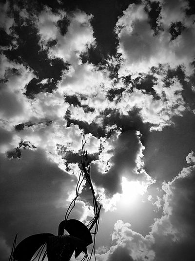 Low Angle View Sky Cloud - Sky No People Nature Outdoors Day Beauty In Nature Tree Branch Blackandwhite