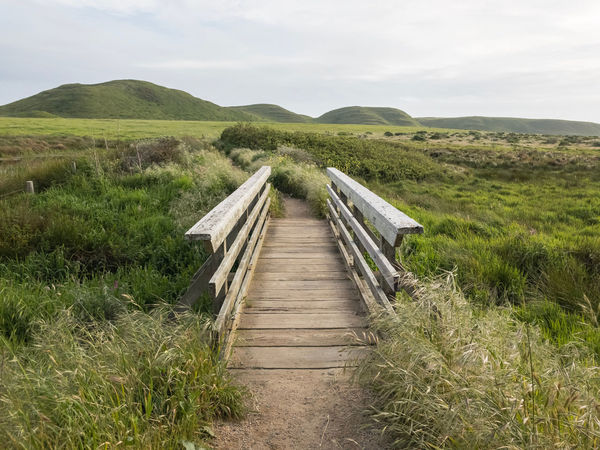 Abbotts Lagoon trail at Point Reyes National Seashore. California, USA. Photo by Tom Bland. Abbotts Lagoon California Coastal Idyllic IPhone IPhoneography Landscape Nature Outdoors Point Reyes Point Reyes National Seashore Rural Serene Spring Tranquil Scene Tranquility Footpath Path Pathway Bridge Trail The Way Forward