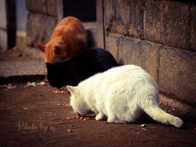 Cat Cat♡ 猫 Stray Cat 野良猫 Cat Lovers Animal 白猫 茶猫 Black Cat