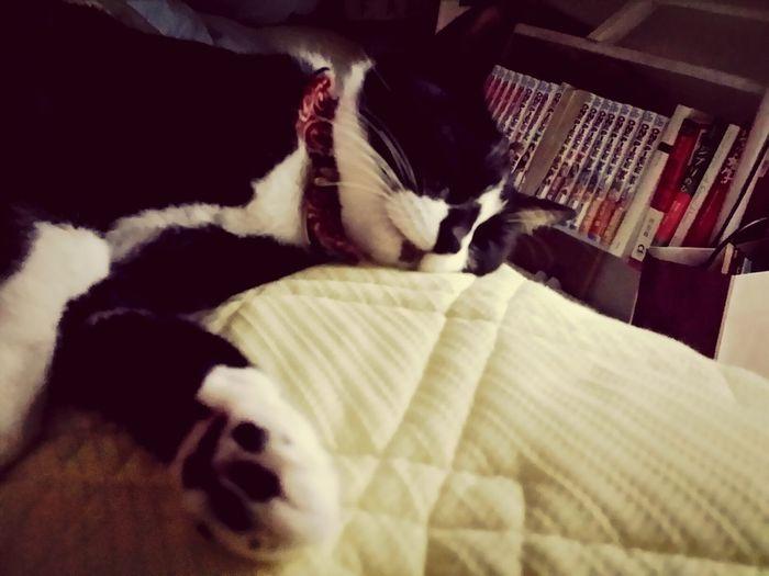 おはぎさん Cat