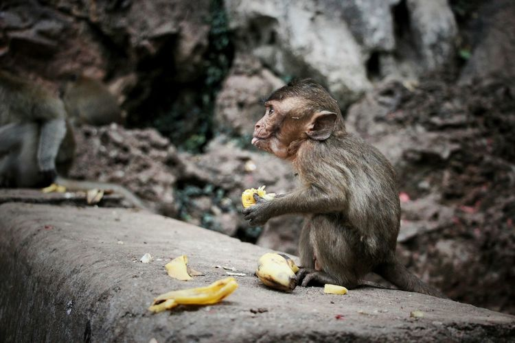 Litlle Monkey