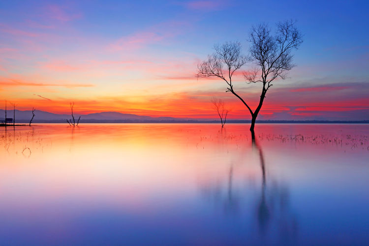 Dawn light over silhouette dead tree on the lake with beautiful sunrise Sky Beauty In Nature Scenics - Nature Tranquility Tranquil Scene Water Sunset Tree Orange Color Reflection Idyllic Bare Tree No People Waterfront Nature Lake Plant Silhouette Cloud - Sky Outdoors ASIA Asian  Thailand Dead Trees Dead Trees In Water Calm Tranquil Tranquility Violet Dramatic Sky Dramatic Dramatic Landscape Travel Mystic Branch Branches And Sky Nature Silhouette Purple Purple Sky Beautiful Beautiful Nature