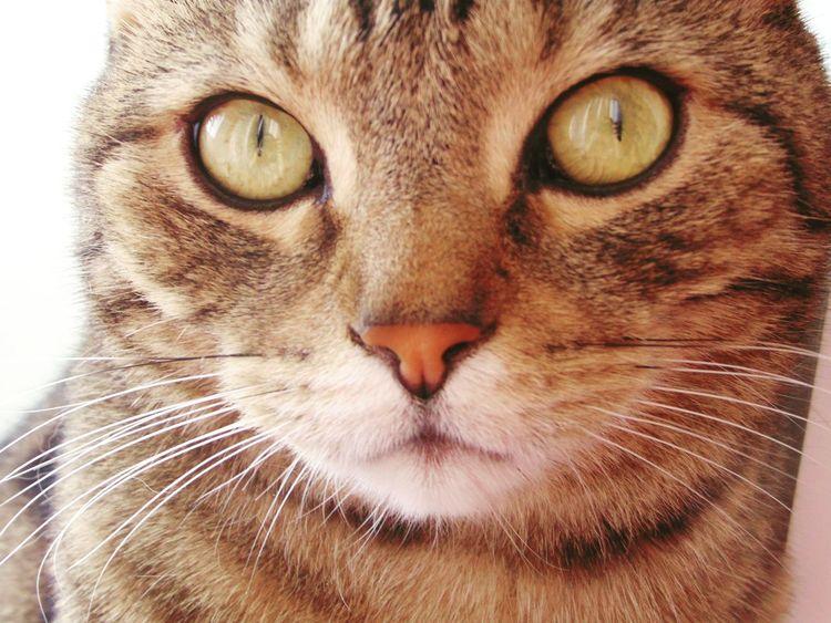 Followme Cat Cats кот котэ няша лапа пупсик пушистик Природа красота глаза