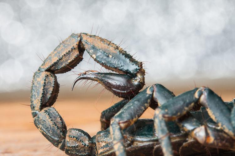Close-up of scorpion on land