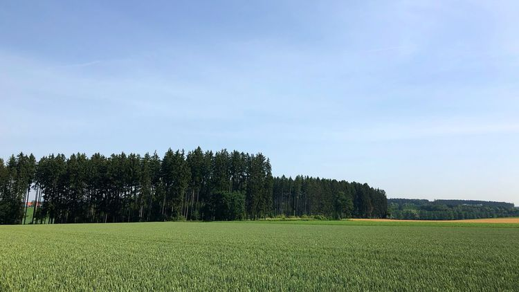 Plant Sky Growth Tree Field Landscape Beauty In Nature Green Color Land Tranquil Scene Tranquility Nature Scenics - Nature No People Agriculture Rural Scene Outdoors Grass Environment Day