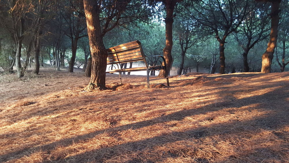Alone in the woods... Lonely Woods Trees Nature Sunset Relaxation Contemplating Beauty EyeEmNewHere Sunrays Countryside Seat Green Calm Grassland